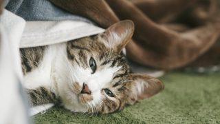 猫のマーキング対策にはこの方法!誰にでも手軽に出来ますよ!